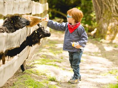 Kleiner Junge fttert Ziegen im Streichelzoo mit Karotten