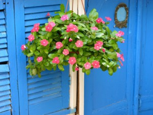 Zierpflanze vor einem Schuppen mit blauen Lamellentren